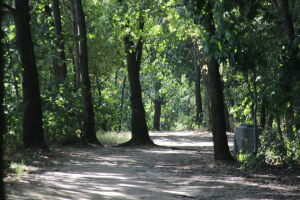 Wytną 600 drzew pod budowę osiedla? Dzielnica: wpłynął wniosek