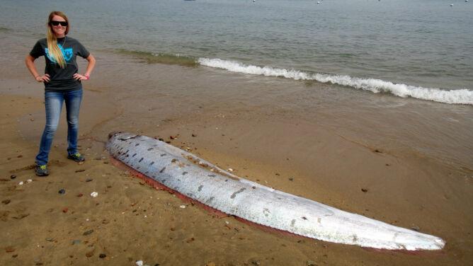 Mityczny potwór wyrzucony na wybrzeże Kalifornii