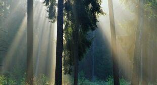 Czy w lesie trzeba będzie nosić maseczkę
