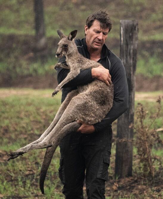 Ludzie pomagają zwierzętom (PAP/EPA/JAMES GOURLEY)